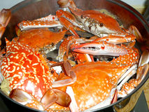 Crab. Delicious crab, fresh and delicious, bigger in size Royalty Free Stock Photos