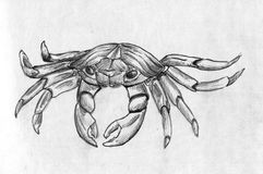 Crab. Hand drawn crab. Pencil drawing, sketch Royalty Free Stock Photo