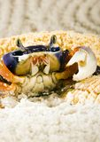 Crab. A crab is a sea animal with a flat body covered by a shell and five pairs of curved legs. The front two legs have long claws, called pincers, on them Stock Photos