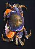 Crab. A crab is a sea animal with a flat body covered by a shell and five pairs of curved legs. The front two legs have long claws, called pincers, on them Stock Photography