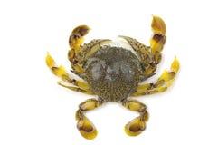 Crab. Isolated  fresh crab on white background Stock Photo
