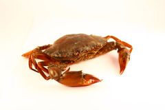 Crab. On white background Royalty Free Stock Image