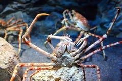Crab. In the marine aquarium Royalty Free Stock Images