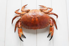 Crab. Orange Crab on white wood table background stock images