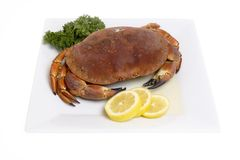 Crab. On a plate against white backround Stock Images