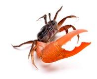 Crab. Isolated on white background stock image