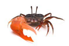 Crab. Isolated on white background stock photo