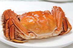 Crab Royalty Free Stock Images