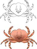 Crab. Sea Crab in black and color stock illustration
