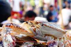 Free Crab Stock Photo - 97144000