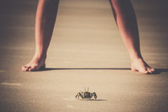 Crab against human Royalty Free Stock Photography