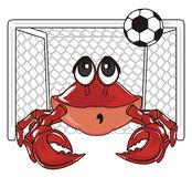 Crab aply to football. Crab like a goalkeeper stand on the gate Royalty Free Stock Photography