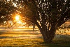 Crab Apple Tree. This Crab Apple Tree is enjoying the beautiful light on a Colorado sunrise royalty free stock photos