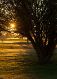 Crab Apple Tree. This Crab Apple Tree is enjoying the beautiful light on a Colorado sunrise stock images