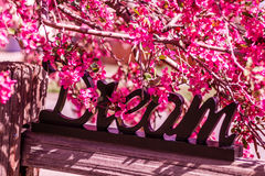Crab Apple Trees in Spring Bloom Royalty Free Stock Photo