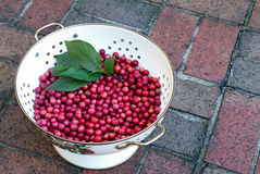 Crab Apples in Colander Stock Images