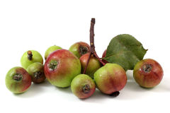 Crab apples with leaf Stock Photography