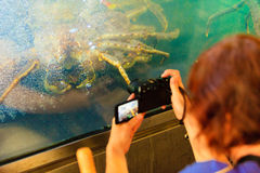 Crab in in aquarium Royalty Free Stock Image