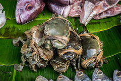 Crab on banana leaf on traditional market in bogor indonesia Stock Images
