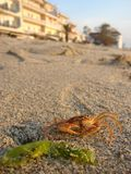 Crab on the beach Stock Image