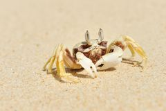 Crab on a beach Stock Image