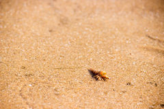 The crab is on the beach. Stock Photography