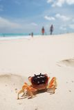 Crab on a beach Royalty Free Stock Image