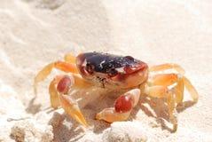 Crab on a beach Stock Photo