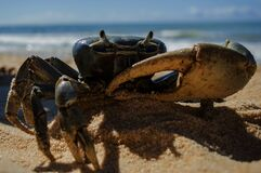Crab on Beach Stock Photo