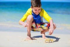 Crab at beach Stock Image