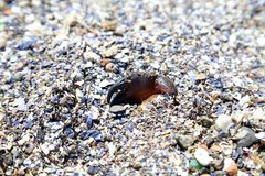 Crab on the beach. Royalty Free Stock Photography