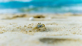 A crab at the beach. In front of the ocean royalty free stock photo