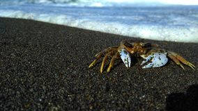 Crab in the beach Stock Images