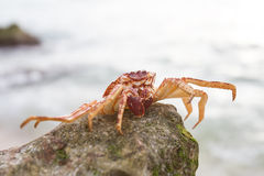 Crab on the beach Stock Photos