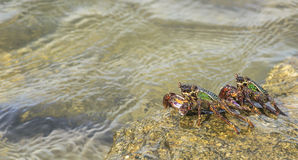 Crab on the beach Royalty Free Stock Image