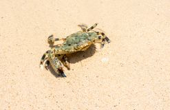 Crab on the beach Stock Photography