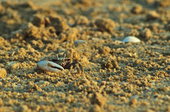 Crab on the beach sand Royalty Free Stock Photo
