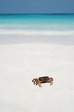 Crab on beach, Thailand Stock Image