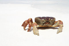 Crab on beach, Thailand Stock Images