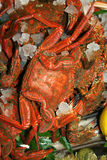 Crab; Beautiful Seafood. Royalty Free Stock Photography