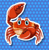 Crab with big claws Stock Photography
