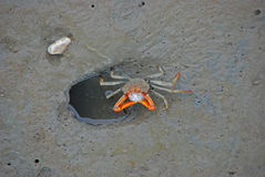 Crab Blowing Bubbles Royalty Free Stock Photos