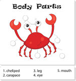 Crab body parts. Animal anatomy in English. Write the correct numbers of body parts Stock Image