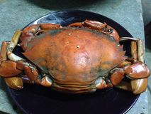 Crab boil Stock Images