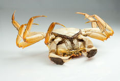 Crab bottom up Stock Images