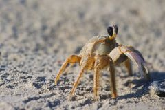 Crab on Bulls Island SC stock images