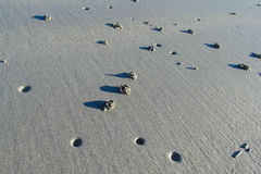 Crab burrows on sand beach Stock Image