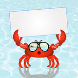 Crab with card Stock Photography