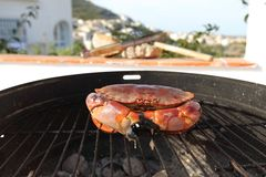 Crab on charcoal grill Royalty Free Stock Images
