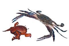 Crab chase Royalty Free Stock Photo